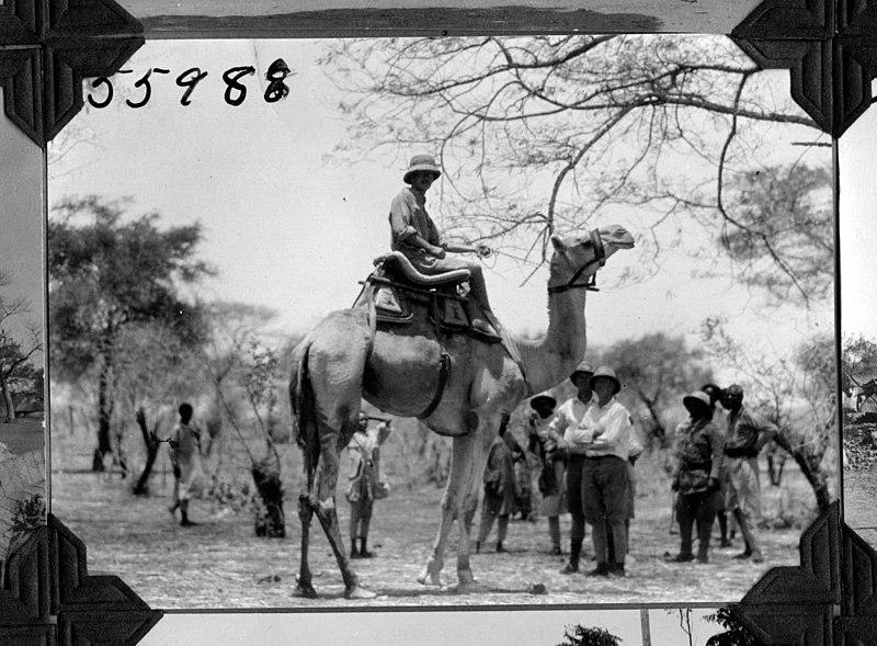 File:Man on camel.jpg