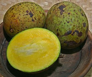 Mangifera foetida - Mangifera foetida from Bogor, West Java, Indonesia