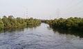 Mangrove Garden Wadala.JPG