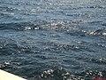 Mar de água, que chega a fazer ondas no reservatório da Usina de Promissão (530 Kms²), que foi represado a partir de outubro de 1974. A travessia de balsa tem 3.5 Kms e dura cerca de 40 minutos. Antes d - panoramio (6).jpg