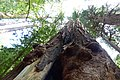 Marin County, CA, USA - panoramio (58).jpg
