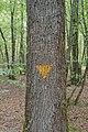 Marque chamois arbre bio.jpg