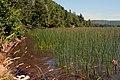 Marsh Edge (237532257).jpg