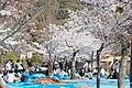 Maruyama Park (3515278361).jpg