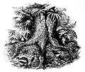 Megapode nest.jpg