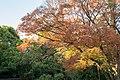 Meiji Jingu (24727530638).jpg