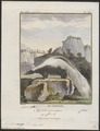 Mephitis chinga - 1700-1880 - Print - Iconographia Zoologica - Special Collections University of Amsterdam - UBA01 IZ22500131.tif