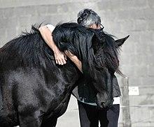 La Légende du cheval noir de l'Islet dans CHEVAL 220px-Merens_calin