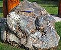 Metamorphosed pillow basalt (Ely Greenstone, Neoarchean, ~2.722 Ga; large loose block at Ely visitor center, Ely, Minnesota, USA) 5 (20830803104).jpg