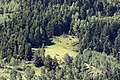 Mixed forest in Asarcık, Şebinkarahisar 01.jpg