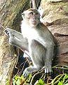 Monkey in Kuala Lumpur.jpg