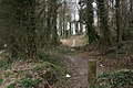 Morgan's Wood - geograph.org.uk - 376347.jpg