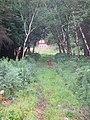 Morgan Arboretum 08.jpg