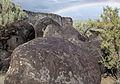 Morley Nelson Snake River Birds of Prey NCA (9423762288).jpg
