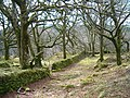 Mossy wall and woodland - geograph.org.uk - 145457.jpg