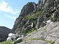 Mountain goats on the North Ridge of Tryfan - geograph.org.uk - 206610.jpg