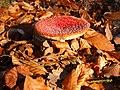 Mykologie v NPR Voděradské Bučiny.jpg