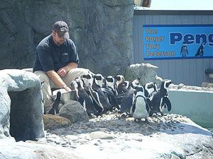 Mystic Aquarium & Institute for Exploration - Penguin feeding