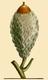 NAS-003f Quercus macrocarpa acorn.png