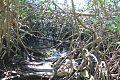NEC Mangrove Forest.jpg