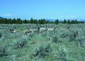 NRCSMT01081 - Montana (5009)(NRCS Photo Gallery).tif