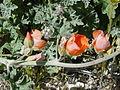 NTS - Wild Flowers 007.jpg