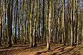 Nationalpark Jasmund, Rügen, 1804060854, ako.jpg