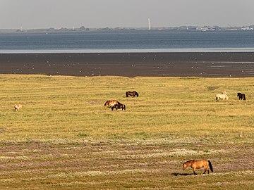 Nationalpark Niedersächsisches Wattenmeer Juist 3.jpg