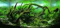 Nature style aquascape.png