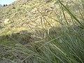 Navidhand Valley, Khyber Pakhtunkhwa, Pakistan - panoramio (148).jpg