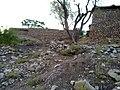 Navidhand Valley, Khyber Pakhtunkhwa , Pakistan - panoramio (35).jpg