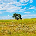 Nebraska Tree near Cisco.jpg