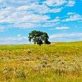 Nebraska Tree near Cisco.jpg