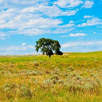 Garden County, Nebraska - Lone tree on the prairie, on Rt 92, just before Lisco.