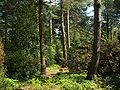 Neuer Botanischer Garten - Heidegarten 002.jpg