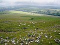 Newly shorn sheep, north of Cox Tor - geograph.org.uk - 1385821.jpg