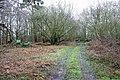 Newnham's Wood - geograph.org.uk - 1779472.jpg