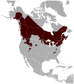 Northern flying squirrel Glaucomys sabrinus distribution map.png