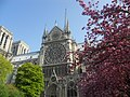 Notre Dame Cathedral Cherry Blossoms (5987322718).jpg