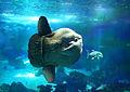 Oceanarium at Parque das Nações (5967701739).jpg