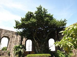 Santiago Apóstol Parish Ruins - Image: Old ruins in cartago daniel vargas 02