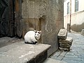 Old Baku Cat - panoramio.jpg
