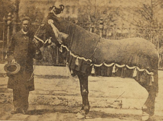 Old Bob Driving horse of Abraham Lincoln