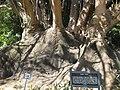 Ombu trees.jpg