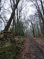 On a bridleway through Hollin Wood - geograph.org.uk - 1670886.jpg