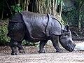 One Horned Rhinocerous 01.jpg