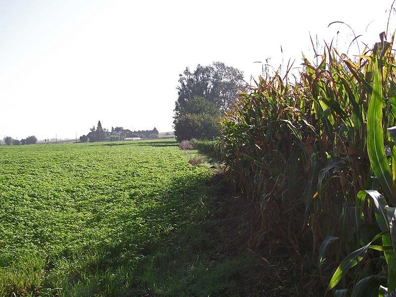 Buurtspoorweg tracé richting Tienen bij Oorbeek. Langs de rand van de velden.