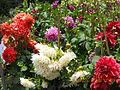Ooty Botanical garden13.JPG