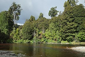 Oparara River in Kahurangi National Park.jpg