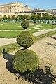 Orangerie du château de Versailles le 11 septembre 2015 - 26.jpg